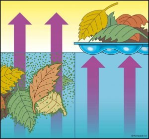 cubierta evita evaporación